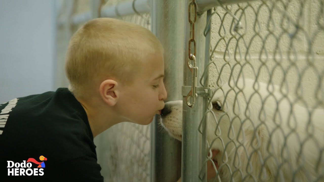 This Kid's Goal Is To Get Every Single Shelter Dog in the U.S. Adopted | The Dodo Heroes Season 2