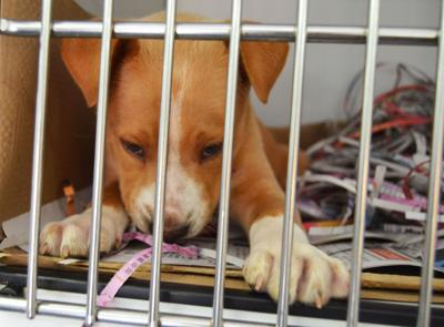 Georgia Ag Department issues stop order prohibiting intakes at Albany Humane Society