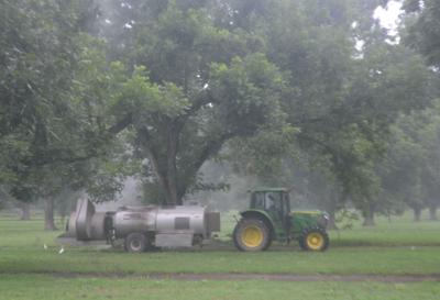 Grim picture for area pecan farmers this year and beyond