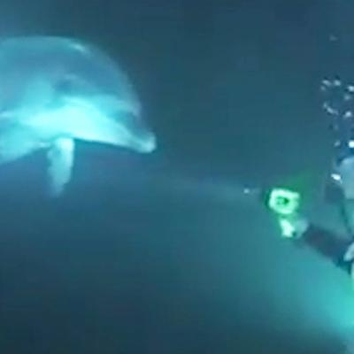 VIDEO: Dolphin Swims Up To Diver To Ask For Help