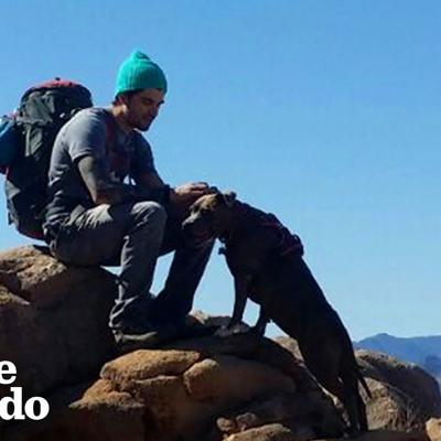 Hike With The World's Most Resilient Pittie | The Dodo Airbnb Experiences