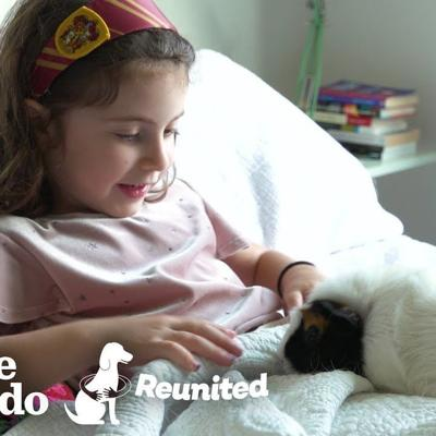 Little Girl And Guinea Pig Are The Cutest Pen Pals | The Dodo Reunited