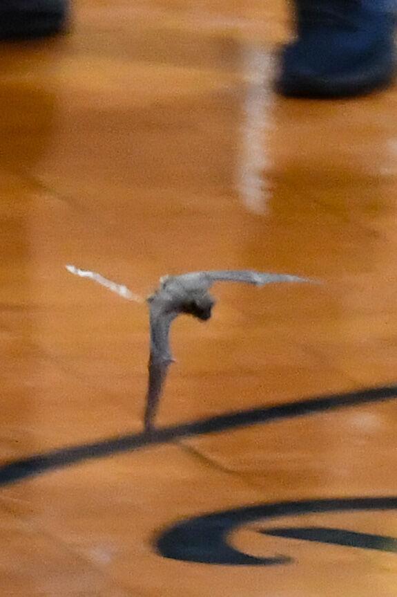 A bat descended on Dadeville
