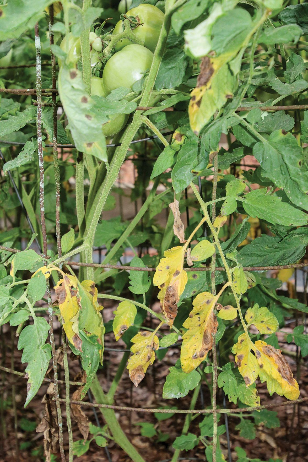 0705 Tomato workshop 1.jpg
