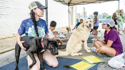 Animal shelter in need of long-term food solution