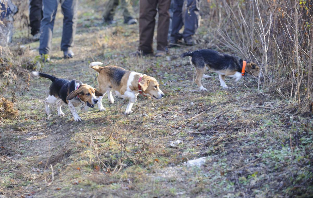 Beagle Trials
