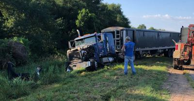 Semi Strikes Cows On Highway 14