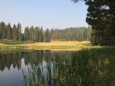 Open flames prohibited at Mendocino National Forest through October