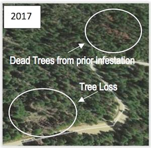 "<p class=""p1""><strong>This Department of Forestry photograph shows were destruction from insects and disease have damaged stands of forest in the Four Beetles South Forest Health Improvement Project area in Tehama County.</strong></p><p class=""p2""> </p><p class=""p2""> </p><p class=""p4"">       </p>"