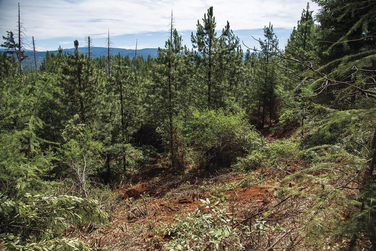 Healthy Forest Project