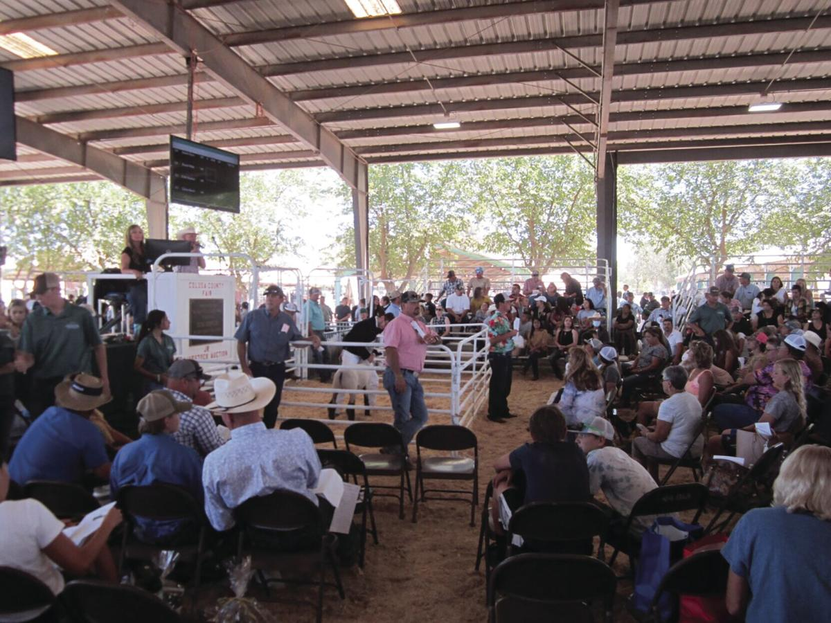 Traditional Junior livestock auction returns to Colusa