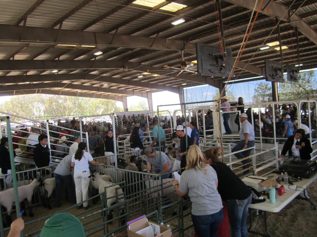 livestock2.JPG
