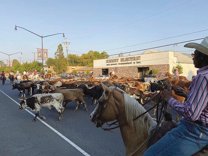 Marysville Stampede Cattle Drive