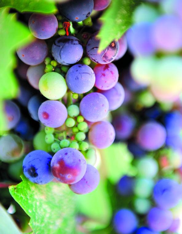 Cordi Winery