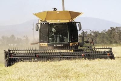 Colusa County sees $24.8 million increase in agricultural production