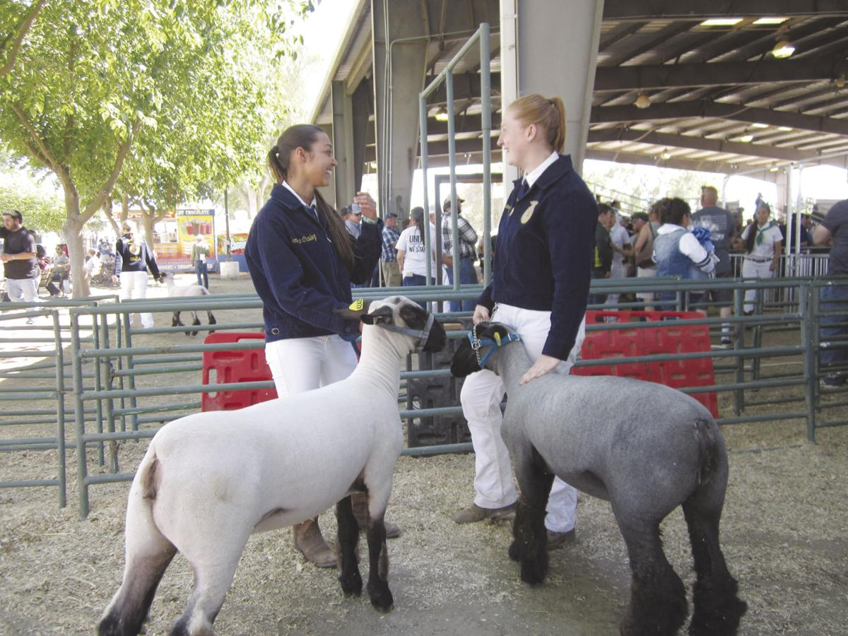 Colusa County Fair