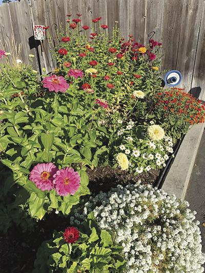 Every Blooming Thing: Z is for Zinnias