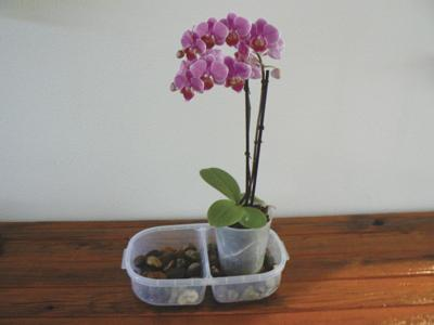 Every Blooming Thing: The Exotic Orchid