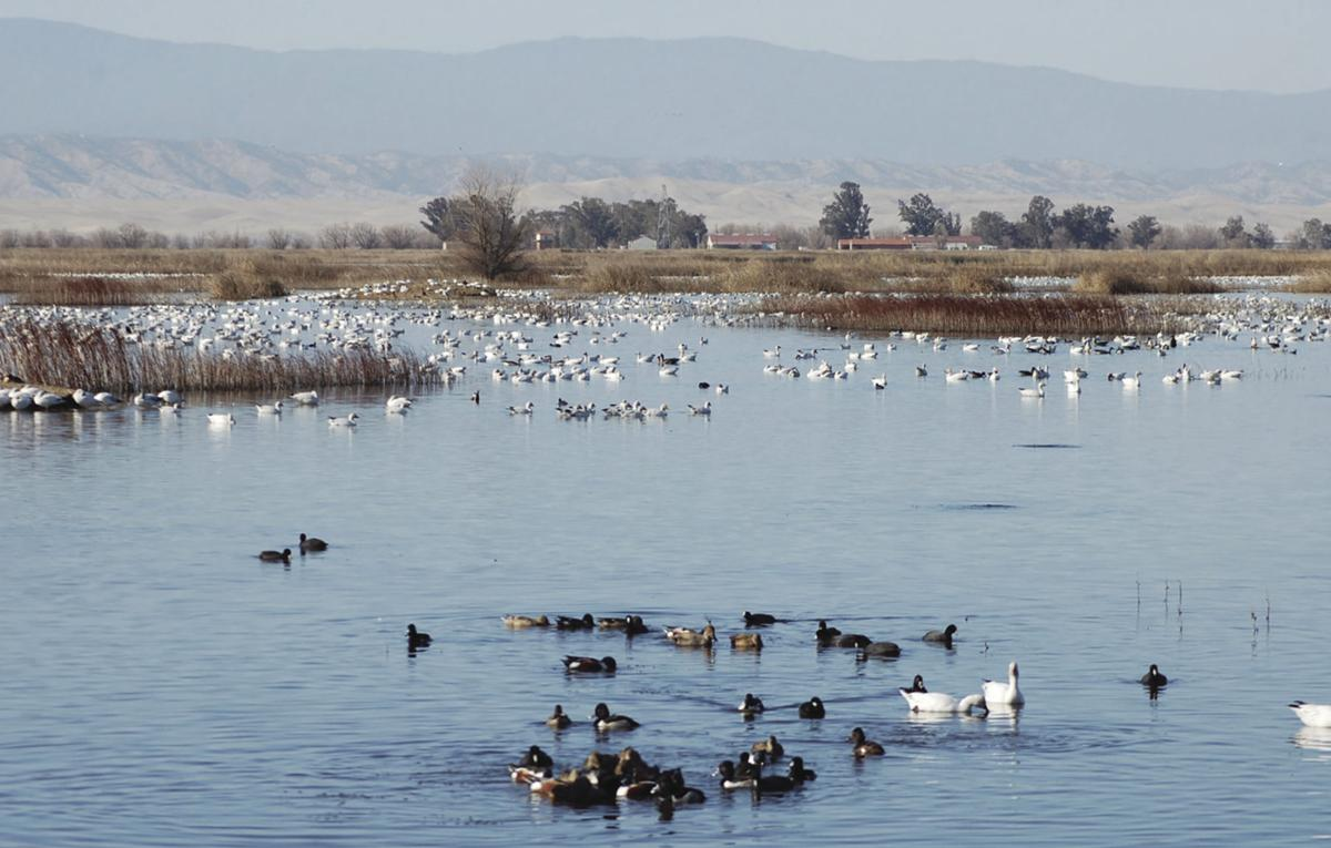 U.S. Fish and Wildlife Service offering weekend programming