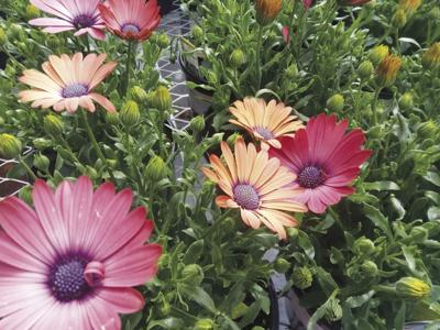 Every Blooming Thing: Groundcovers to eliminate weeds