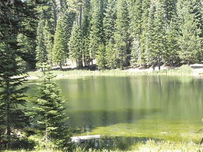 Mendocino National Forest has reopened some campsites