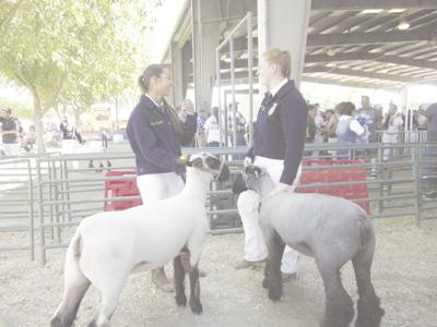 Livestock auction to proceed with modifications