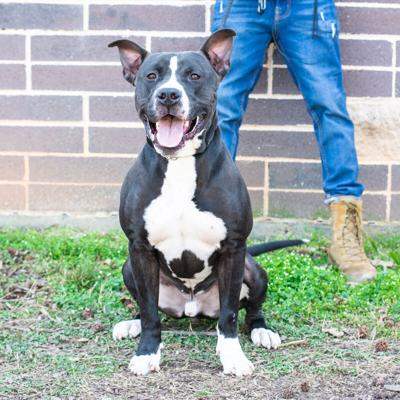 Pet of the Week: Ruger
