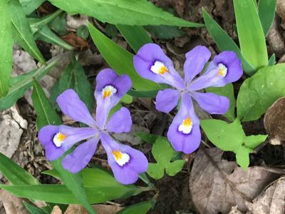Opinion: Take a wildflower watching walk