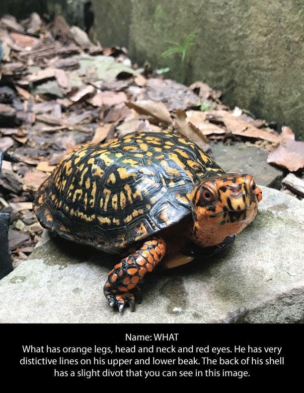 Autrey Mill turtles
