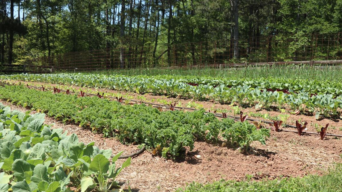 Cherith Farm in Milton