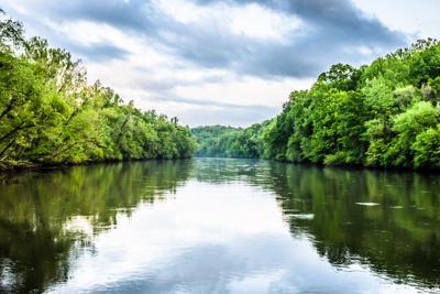 Dog's death sparks testing for blue green algae toxins in Chattahoochee River