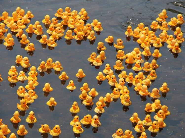 The Great Annual Duck Race happens October 16