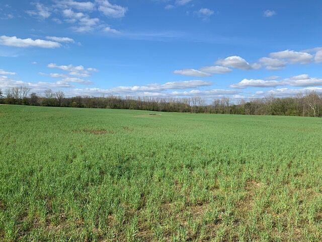 Ashland County cover crops
