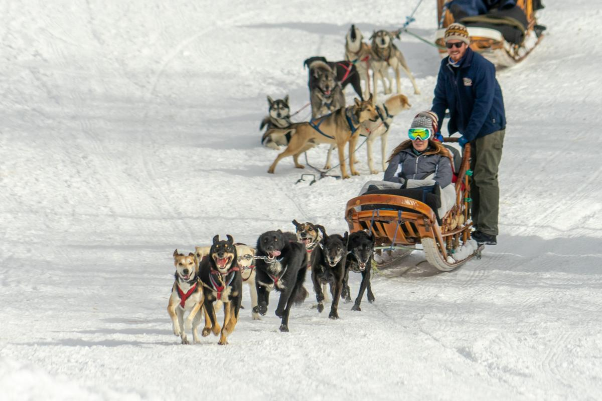 Go dog go: Krabloonik owners move beyond just dog-sled rides