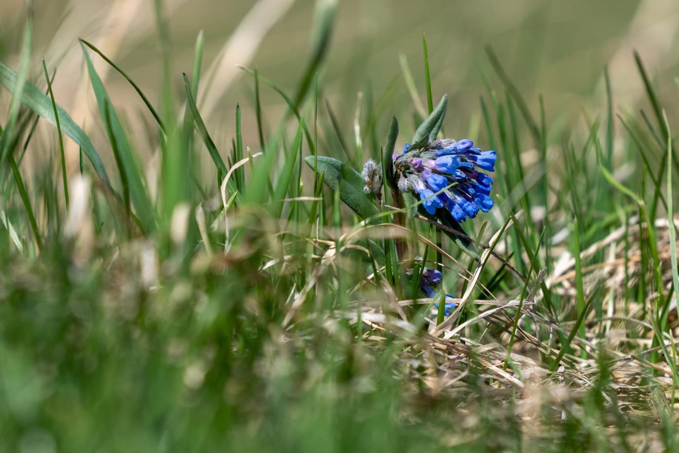 200501_SpringWildflowers_CT.jpg