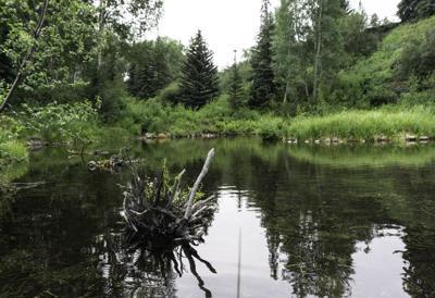 hallam lake
