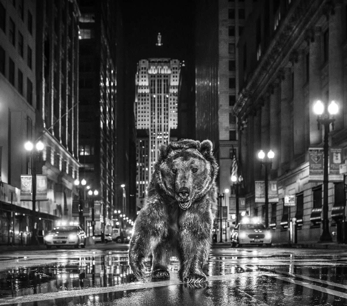 David Yarrow-Chicago Bears