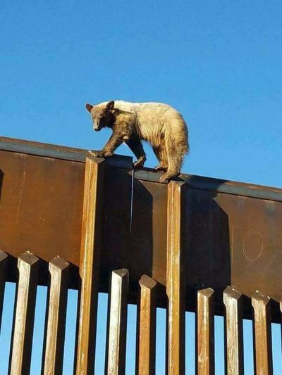 Wall Bear