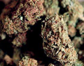 Cannabis Clubs