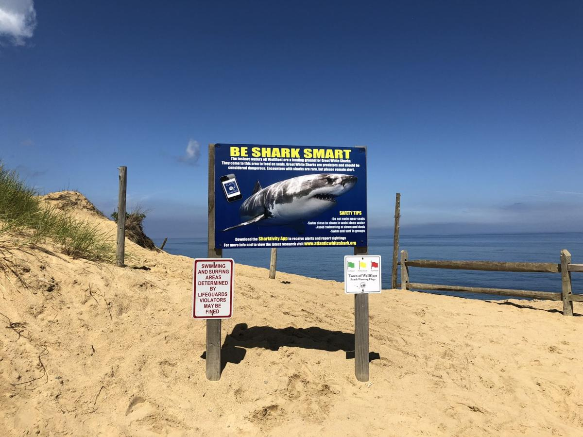 Great white shark sightings are common.jpg