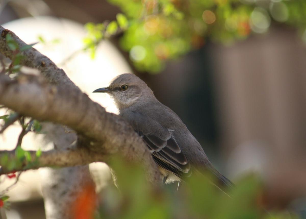 Bird near Roscoe's (2/2)