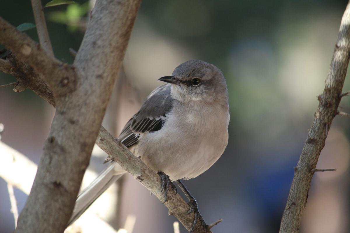 Bird near Roscoe's (1/2)
