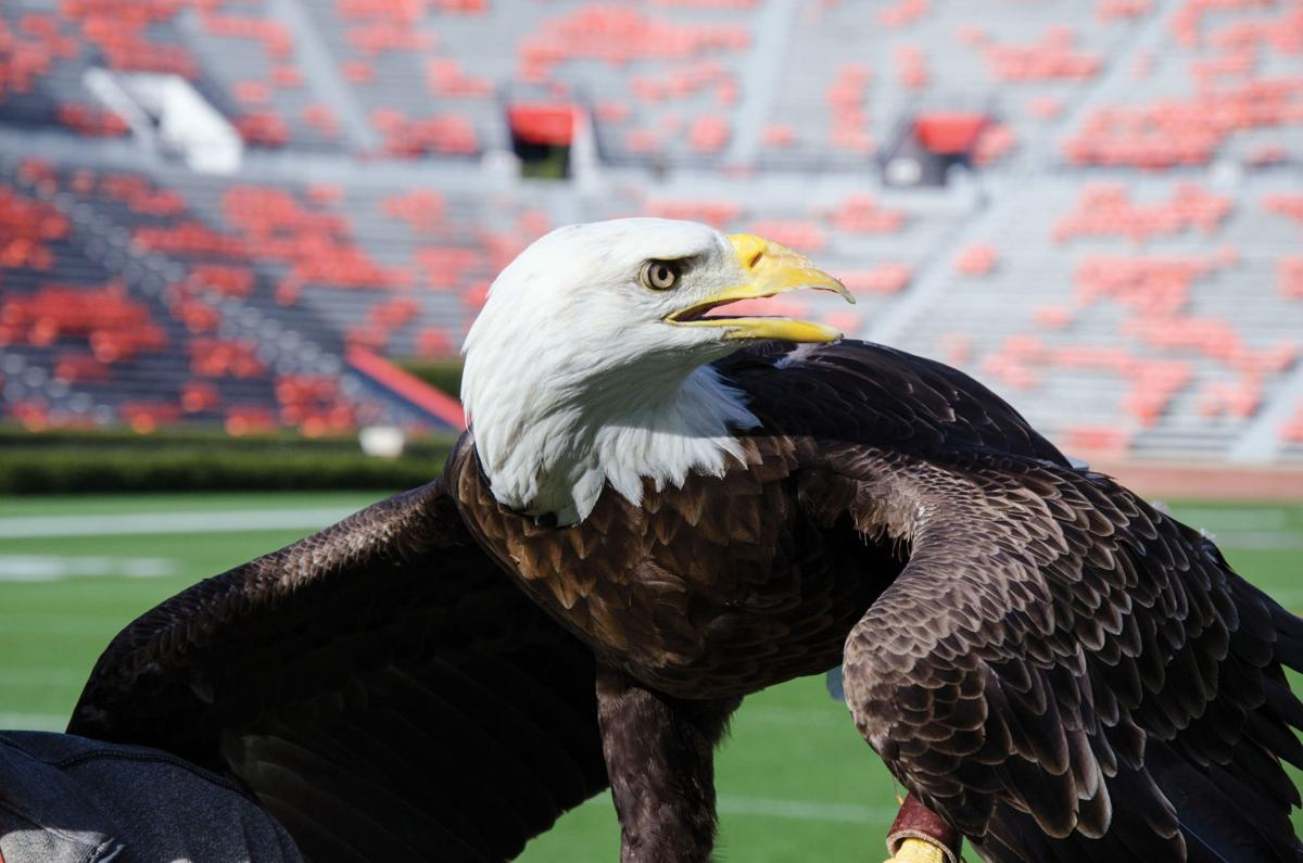 Fly down the field: Auburn's pre-game tradition to ...
