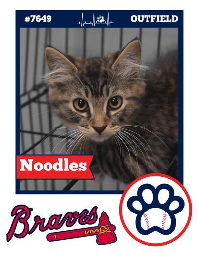 Kitten baseball card
