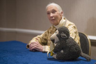 Jane Goodall and Mr. H, a stuffed monkey Goodall has owned for 32 years