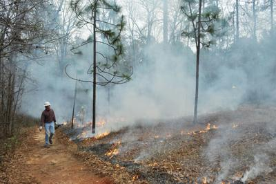 Auburn School of Forestry and Wildlife Sciences' forest fire management conducts a prescribed burn at the Kreher Preserve