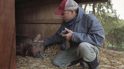 Film Review - The Biggest Little Farm