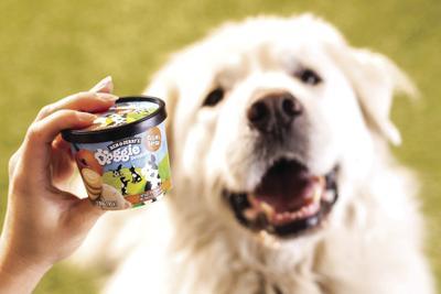 Ben & Jerrys Dog Treats