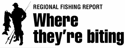Where they're biting