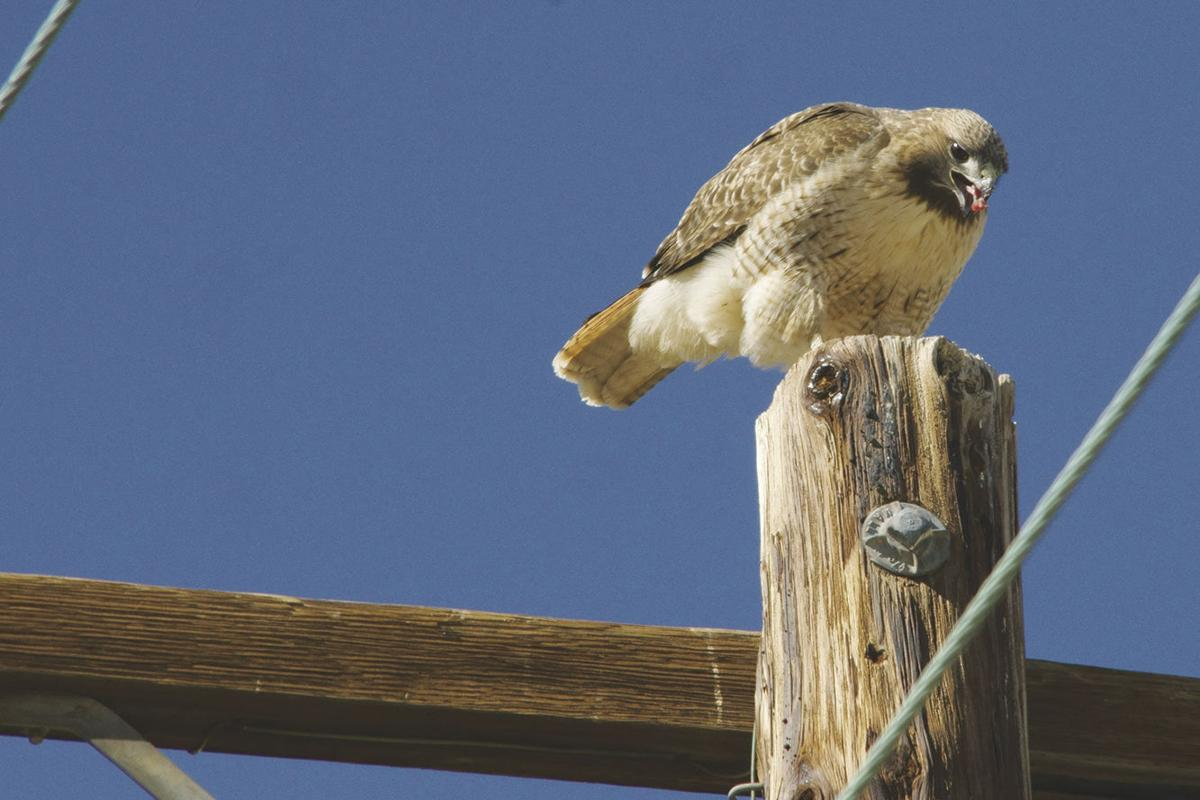 sPower Audubon 2